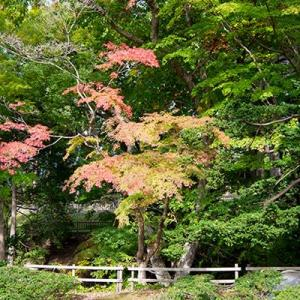 函館見晴公園の秋