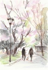 堀川沿いの桜