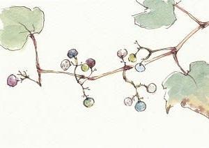今年のノブドウ
