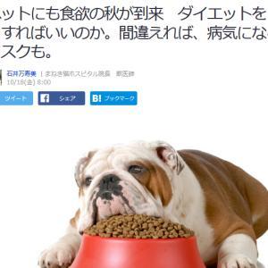 ■Yahoo!ニュース  ペットにも食欲の秋が到来 ダイエットをどうすればいいのか。
