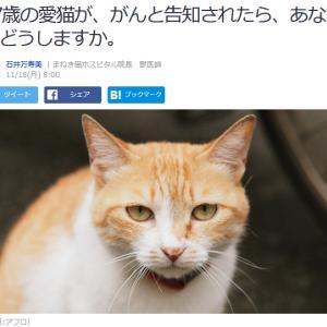 ■Yahoo!ニュース 17歳の愛猫が、がんと告知されたら、あなたはどうしますか。
