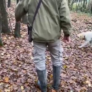 ■犬 褒めて育てると、トリュフ犬に イタリアから。#使役犬