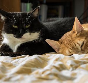 ■ネコ 中国・武漢の新型コロナウイルス感染症が出ていますが、猫のコロナウイルスは、大丈夫?