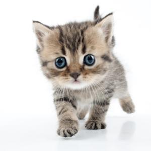 ■ネコ 保護した子猫は、なぜ弱い子が多いのか? #初乳#ラクトフェリン