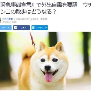 ■Yahoo!ニュース 『緊急事態宣言』で外出自粛を要請 ウチのワンコの散歩はどうなる?