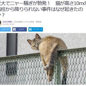 ■Yahoo!ニュース 近大でニャー騒ぎが勃発! 猫が高さ10mの電柱から降りられない事件