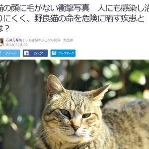 ■Yahoo!ニュース 猫の顔に毛がない衝撃写真 人にも感染し治りにくく、野良猫の命を危険に晒す