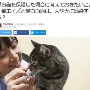 ■Yahoo!ニュース 野良猫を保護した場合に考えておきたいこと 猫エイズと猫白血病は、人や犬に