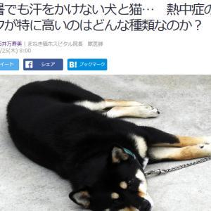 ■Yahoo!ニュース 酷暑でも汗をかけない犬と猫… 熱中症のリスクが特に高いのはどんな種類