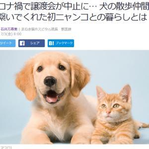 ■Yahoo!ニュース コロナ禍で譲渡会が中止に… 犬の散歩仲間が繋いでくれた初ニャンコ