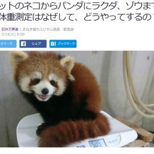 ■Yahoo!ニュース ペットのネコからパンダにラクダ、ゾウまで 体重測定はなぜして、
