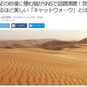 ■Yahoo!ニュース UAEの砂漠に棲む猫がSNSで話題沸騰!見惚れるほど美しい