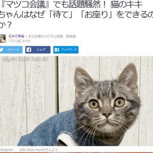■Yahoo!ニュース 『マツコ会議』でも話題騒然! 猫のキキちゃんはなぜ「待て」できるのか?