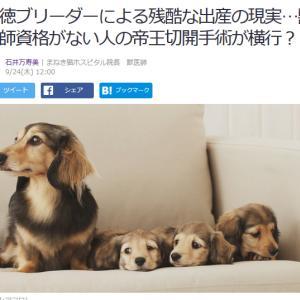 ■Yahoo!ニュース 悪徳ブリーダーによる残酷な出産の現実…獣医師資格がない人の帝王切開手術を