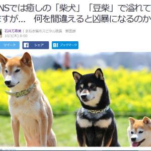 ■Yahoo!ニュース SNSでは癒しの「柴犬」「豆柴」で溢れていますが... 間違えると凶暴に
