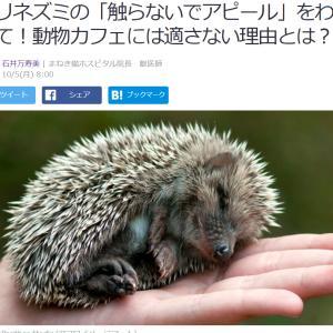 ■Yahoo!ニュース ハリネズミの「触らないでアピール」をわかって!動物カフェには