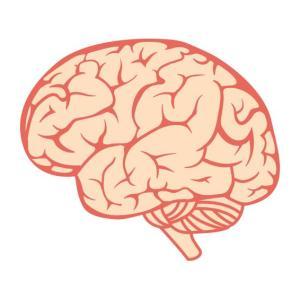 ■シニア 脳の老化にはどうすればいいの? #シニア犬#高濃度ビタミンC点滴