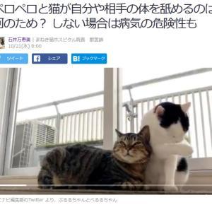 ■Yahoo!ニュース ペロペロと猫が自分や相手の体を舐めるのは何のため? しない場合は