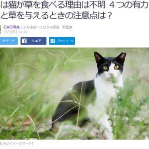 ■Yahoo!ニュース  集 実は猫が草を食べる理由は不明 4つの有力説と草を与えるときの注意点