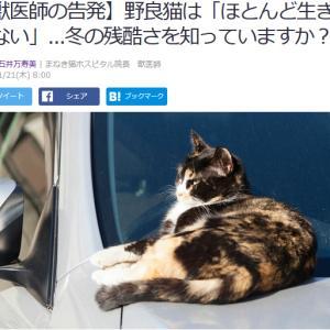 ■Yahoo!ニュース  獣医師の告発】野良猫は「ほとんど生き残れない」...冬の残酷さ