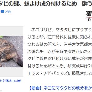 ■ネコ ネコにマタタビの謎、虫よけ成分付けるため 酔うのは? 朝日新聞