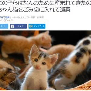 ■Yahooニュース 「この子らはなんのために産まれてきたの」赤ちゃん猫をごみ袋に入れて遺棄