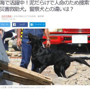 ■Yahooニュース 熱海で活躍中!泥だらけで人命のため捜索する災害救助犬。警察犬との違いは?