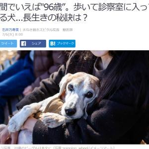 """■Yahooニュース 人間でいえば""""96歳""""。歩いて診察室に入ってくる犬...長生きの秘訣は?"""