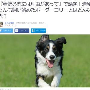 ■Yahooニュース 『着飾る恋には理由があって』で話題!清原さんも飼い始めたボーダーコリーとは