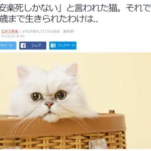 ■Yahooニュース 「安楽死しかない」と言われた猫。それでも19歳まで生きられたわけは..