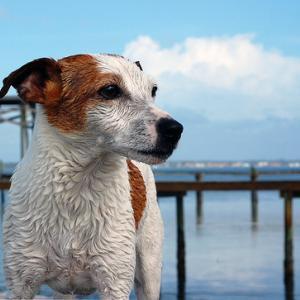 ■がん 犬の消化器型リンパ腫の1例 #消化器型リンパ腫 #丸山ワクチン#高濃度ビタミンンC