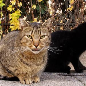 ■ネコ 腎不全の薬 東大のネコ研究のAIMとは?#慢性腎不全 #AIM