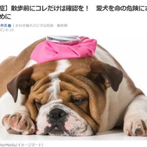 ■Yahooニュース 【熱中症】散歩前にコレだけは確認を! 愛犬を命の危険にさらさないために