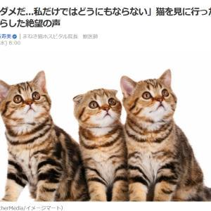 ■Yahooニュース 「もうダメだ...私だけではどうに」猫を見に行った獣医師がもらした絶望の声