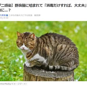 ■Yahooニュース【マダニ感染】野良猫に嚙まれて「消毒だけすれば、大丈夫」は命の危険に...?