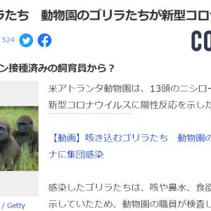 ■新型コロナ アトランタ動物園は、13頭のニシローランドゴリラが新型コロナウイルスに陽性