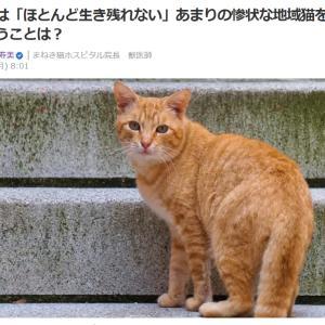 ■Yahooニュース 野良猫は「ほとんど生き残れない」あまりの惨状な地域猫を引き取るということは
