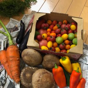★テンションが上がる野菜たち