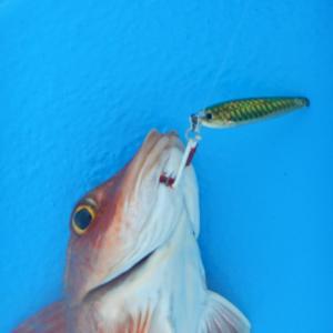ジグ&タイラバ釣行の巻
