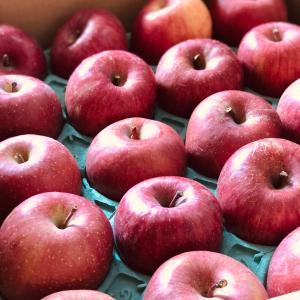 今年もりんごが届きました