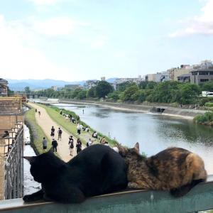 専業主婦は株でボーナス♡ & 橋の欄干上の猫