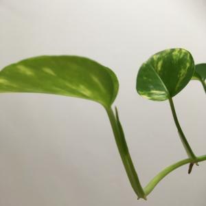 観葉植物の生まれ方