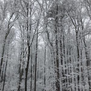 春の大雪とバジル祭り