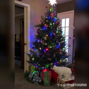 義実家で過ごさないクリスマス