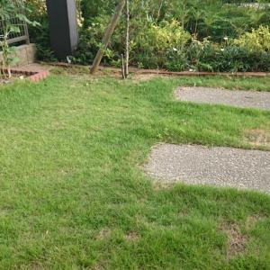 ダンナさんは庭へ芝刈りに