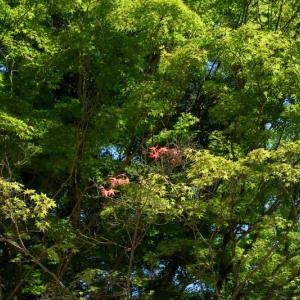 富田林の滝谷不動尊を訪れました