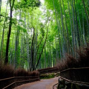 再び竹林をぬけて天龍寺へ