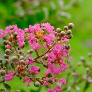 奈良県立万葉文化館の庭の花々