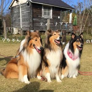 3犬舎合同オフ会 続き