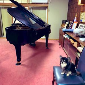 グランドピアノ、完璧